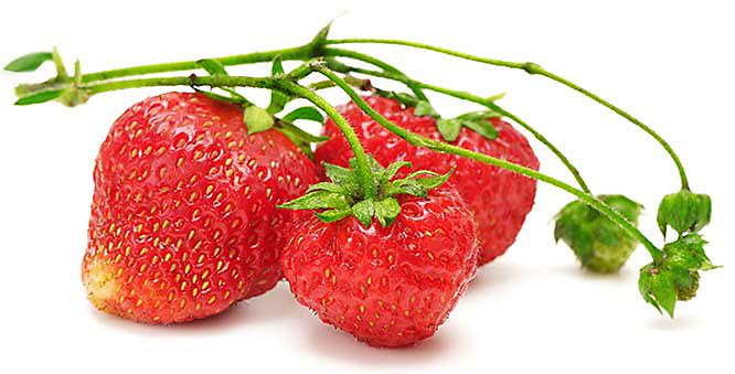 Growing Strawberries In Hydroponics