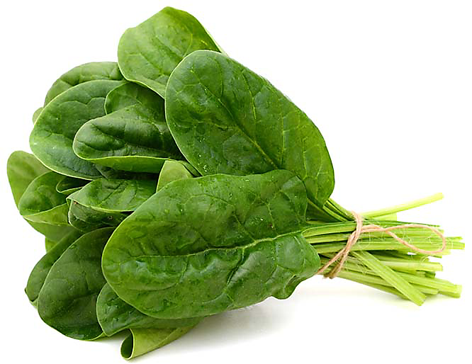 Growing Spinach In Hydroponics