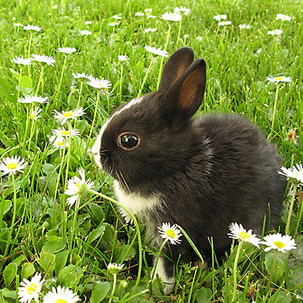How to Get Rid of Rabbits   Rabbit Removal   Havahart®