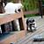 Raccoon on Deck