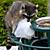 Raccoon Stealing Trash