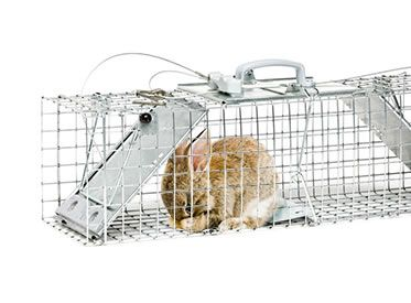 How to Get Rid of Rabbits | Rabbit Removal | Havahart®