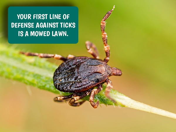 20 Lawn Pests and How to Fight Them