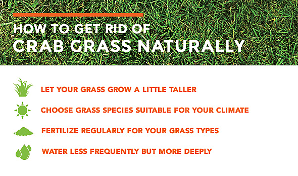 How Do You Get Rid Of Crabgrass Naturally