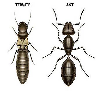 How to Kill Carpenter Ants | TERRO®