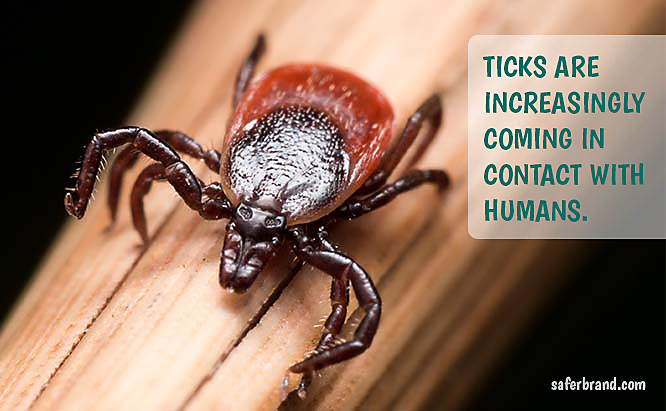 Why are ticks so prevalent?