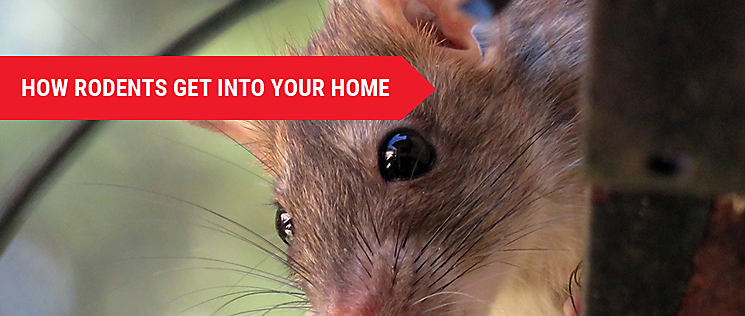 How To Keep Rodents Out Of The Home While Renovating